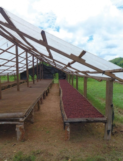 Drying cacao in Peru