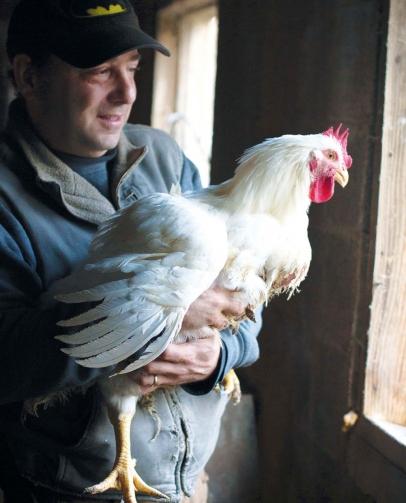 Baffoni's Poultry Farm's Baffoni Holds Cornish Roaster