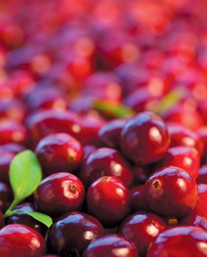 fresh cranberries from the bog