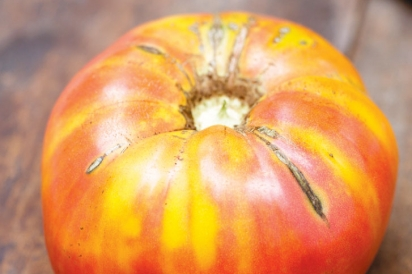 Virginia Sweet Yellow Tomato