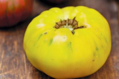 Yellow Brandywine Tomato