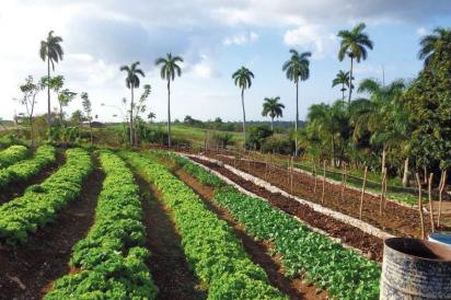 Finca Marta Farm
