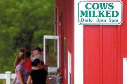 Cow milking barn at Wright's Dairy Farm