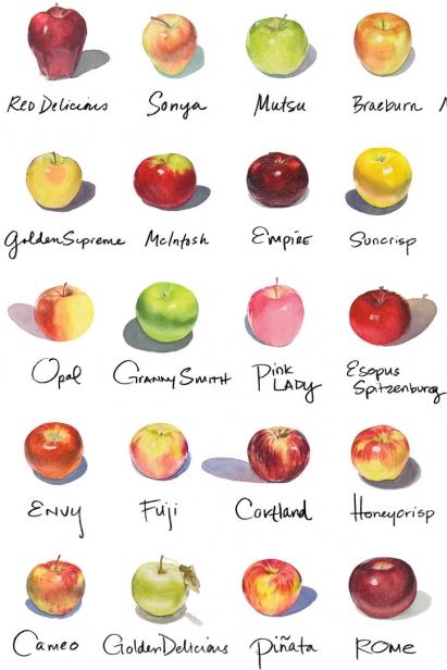 Apples illustration by Michael Lyons