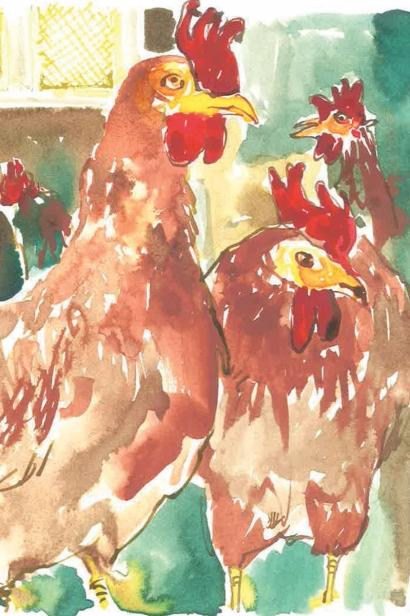 Chickens Illustratio by Jim Bush