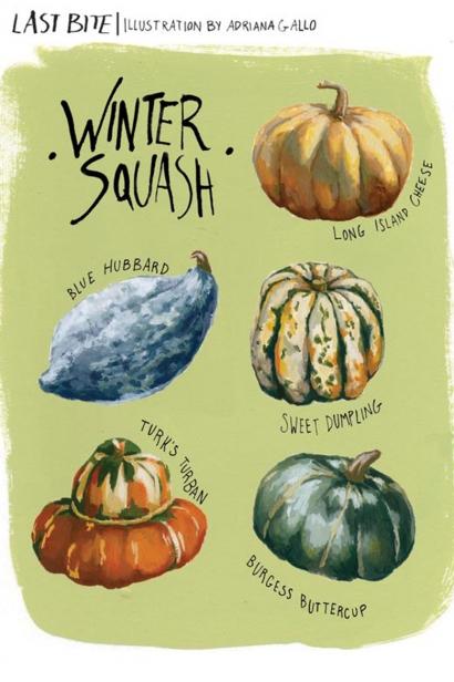 Winter Squash Illustration by Adriana Gallo