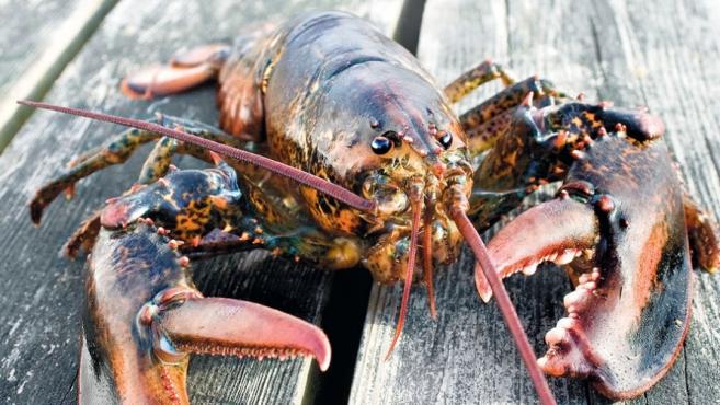 Narragansett Bay Lobsters