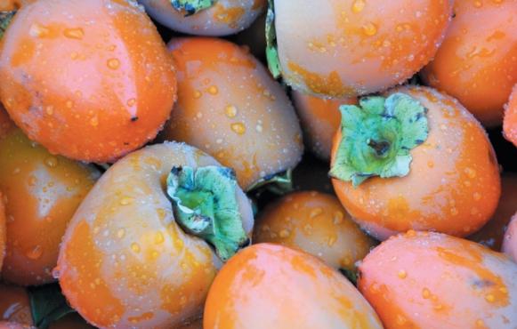 Hachiya persimmons
